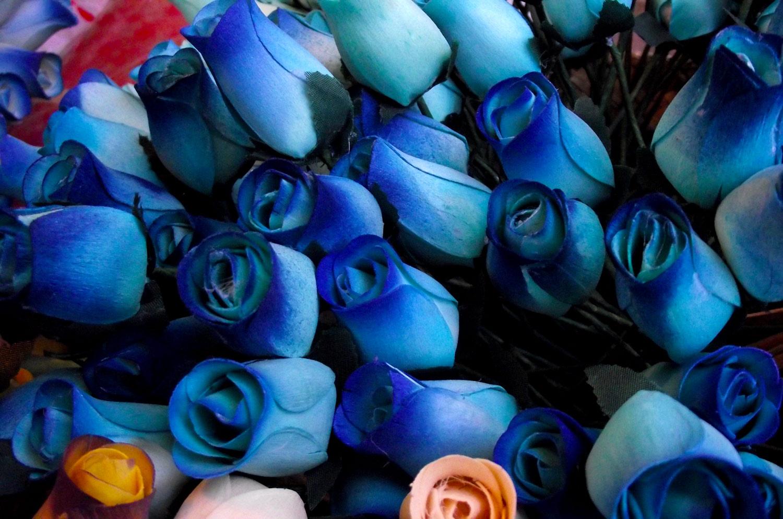 Rosas Azules - Descarga Fotos gratis