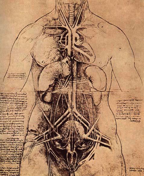 Estudio de organos Leonardo Da Vinci