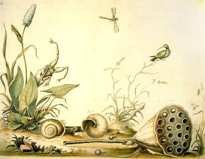 Dibujo de Bartram donde se muestra la relación entre las especies