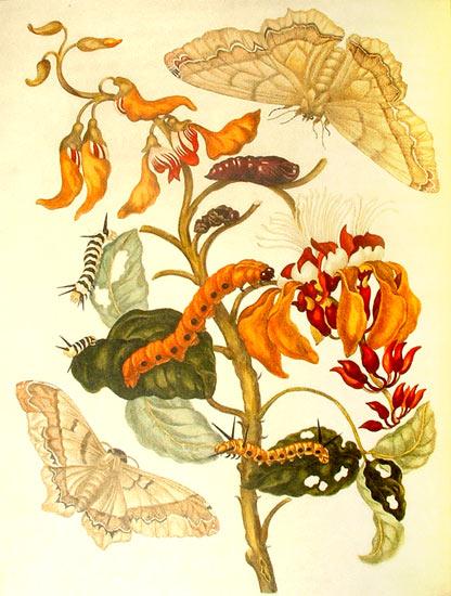 Dibujo naturalista de la metamorfosis de las mariposas