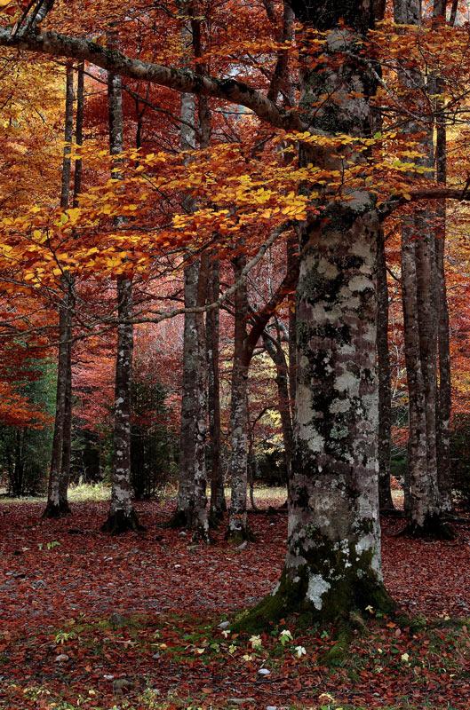 Foto de un árbol en Otoño