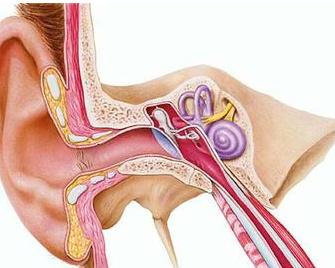 Infografía de un oido