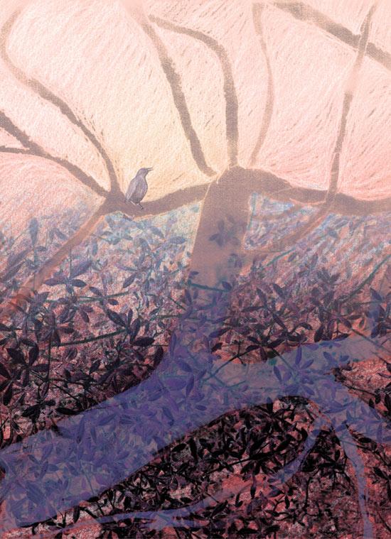 Meadows de Karin Schminke