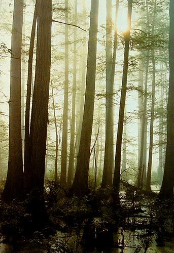 Fotografía original del paisaje con niebla
