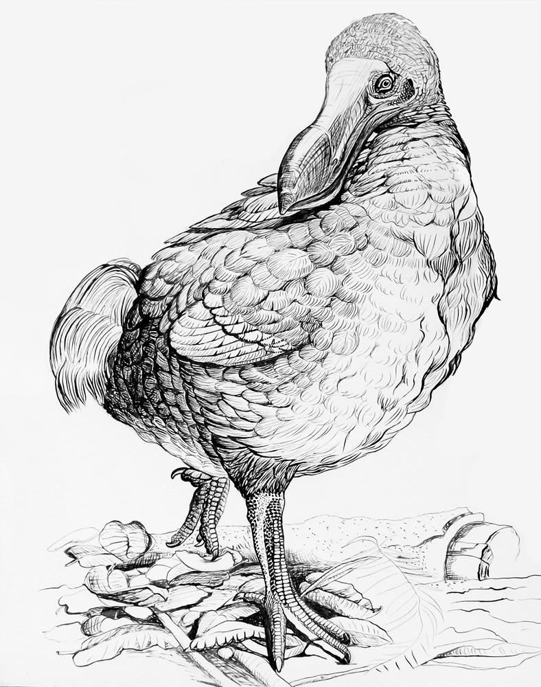 El pájaro Dodo