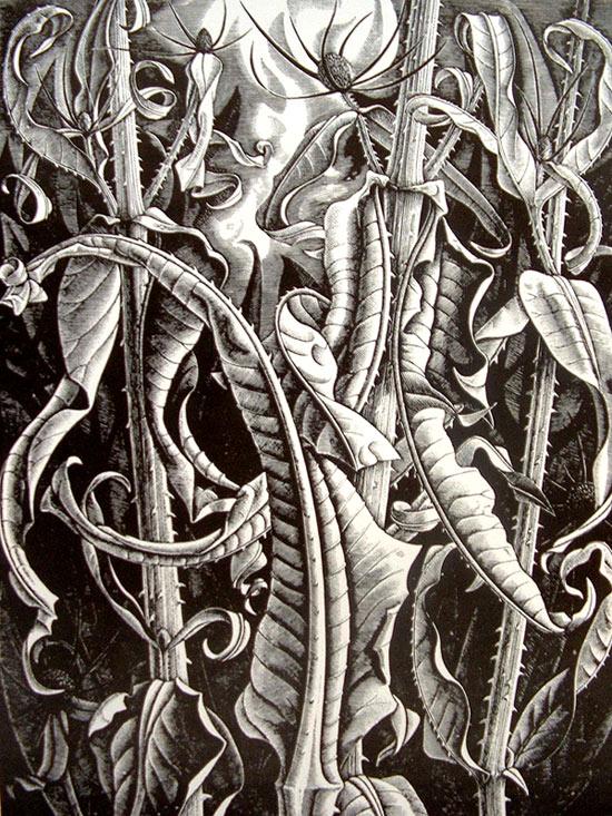 Naturaleza dibujada por Monica Poole