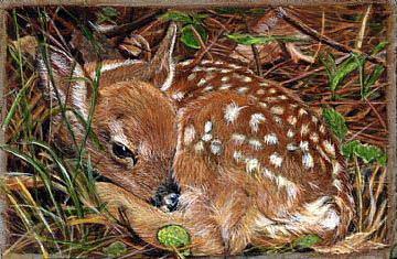Ciervo pequeño de LaVerne Hill