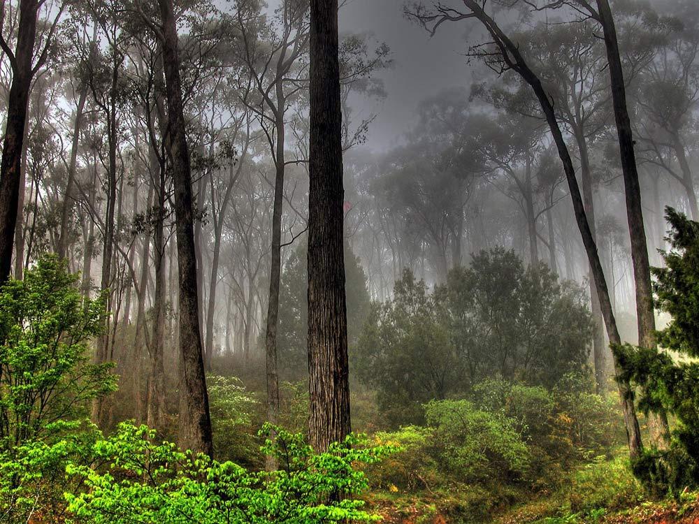 Bosque de árboles muy altos