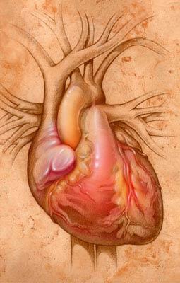 Ilustración de un corazón