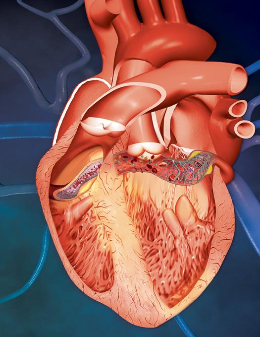 Pintar la anatom a de un coraz n pintura y artistas for Fotos del corazon