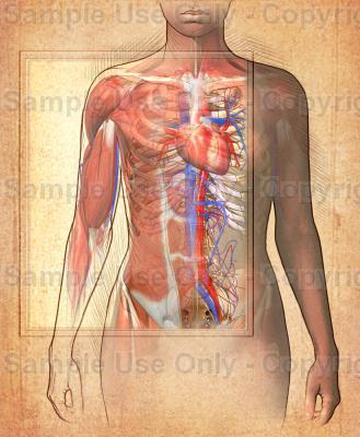 Ilustraciones médicas