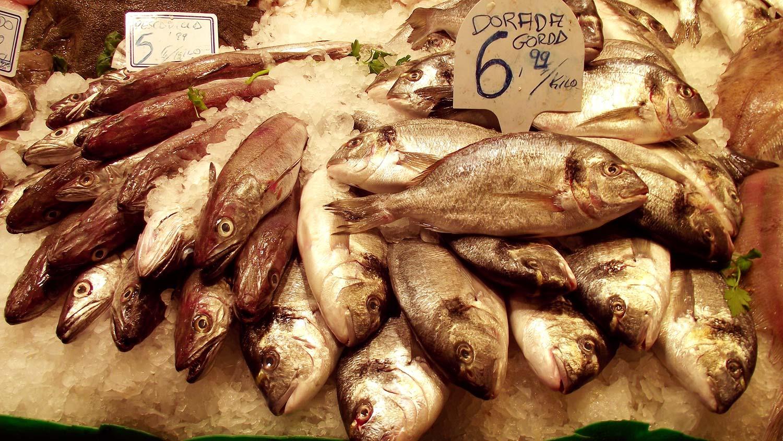 Fotografias gratis - pescados