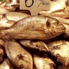 Fotos Gratis - Pescados