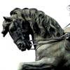 Fotos Gratis Cabeza de un caballo