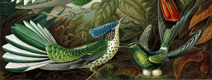 Obras de arte de la Naturaleza de Ernst Haeckel - Pintura