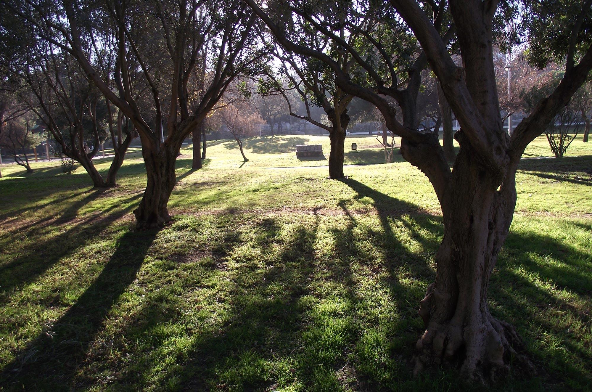 Resplandor en la hierba