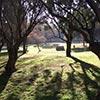 El resplandor en la hierba