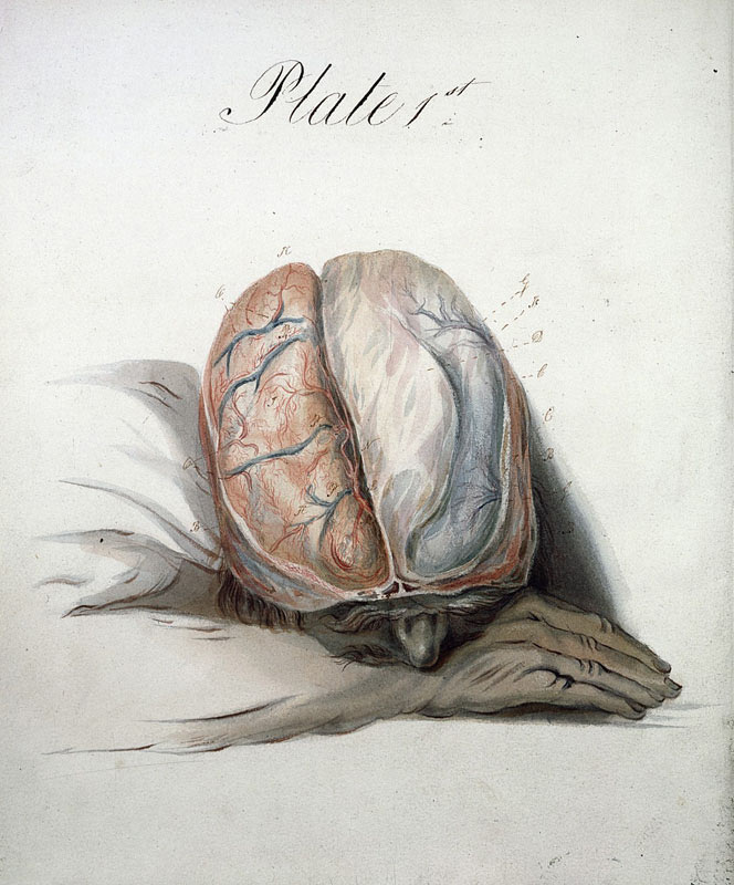 El cerebro, Charles Bell