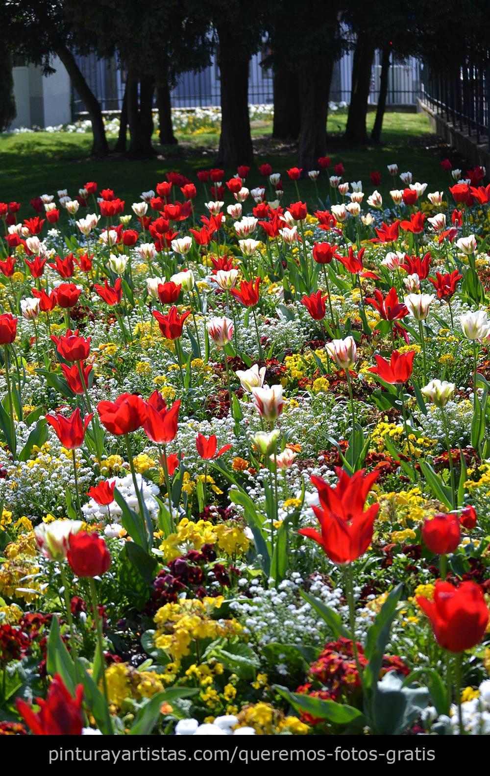 Fotos gratis tulipanes que dicen te quiero pintura y artistas - Plantas de jardin fotos ...