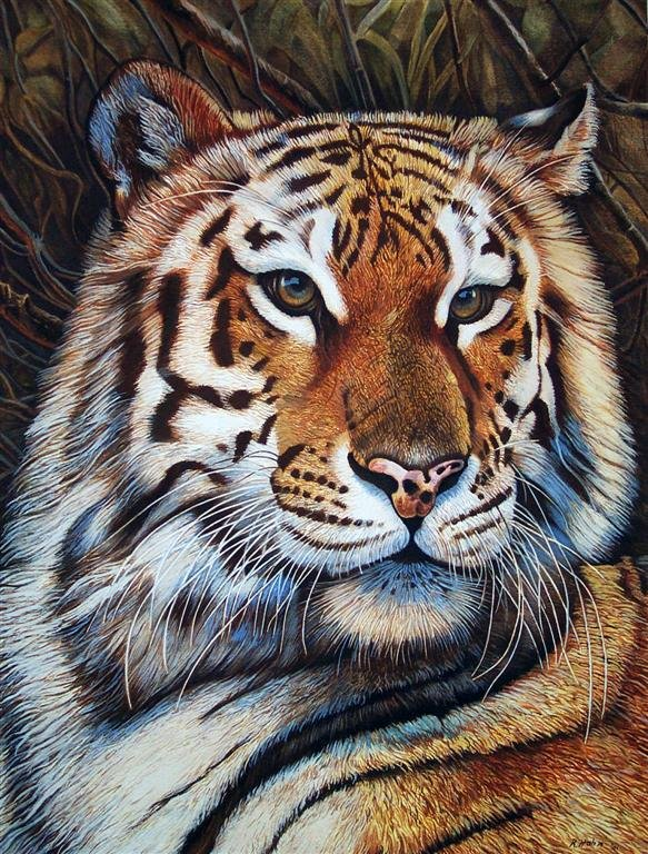 Tigre de Bob Hahn