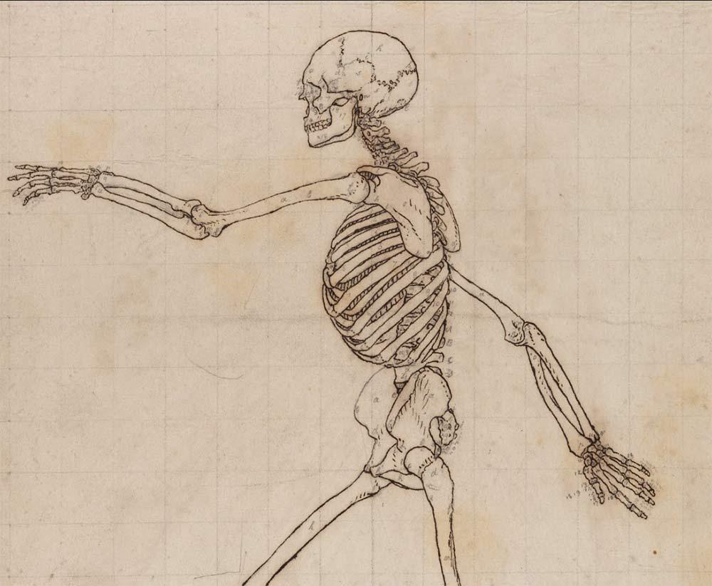 Esqueleto de George Stubbs