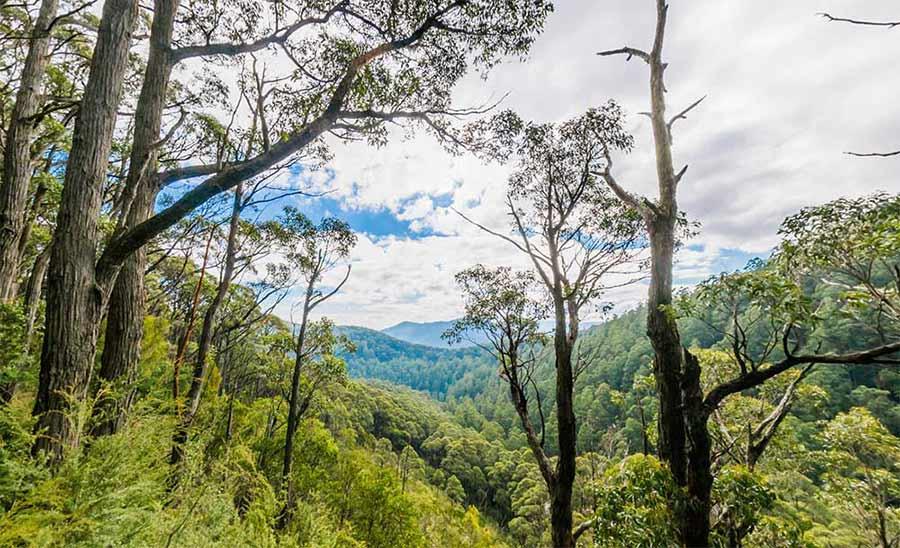 Vista de la naturaleza de Nueva Zelanda con Google Maps