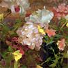 Pintura al óleo Alla Prima con Richard Schmid y Nancy Guzik