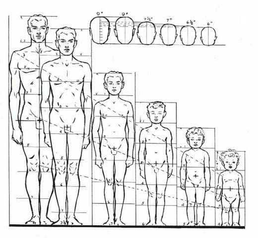 Proporciones de niño a adulto