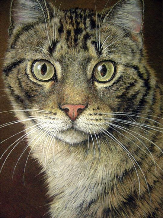 Rostro de un gato con pastel