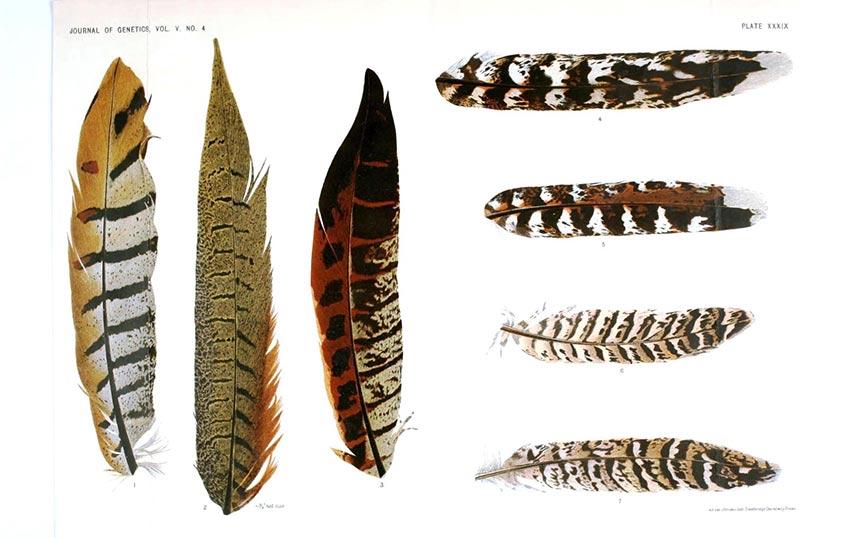 Anatomía del ala de un ave
