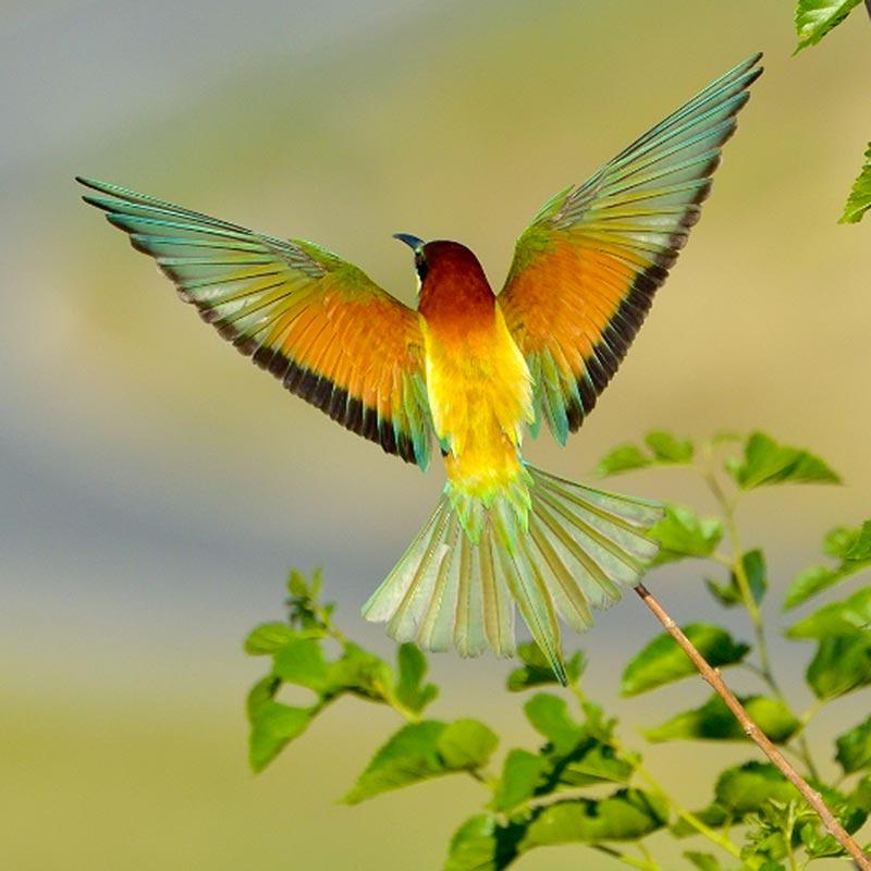 Pintar y dibujar las alas de las aves | Pintura y Artistas