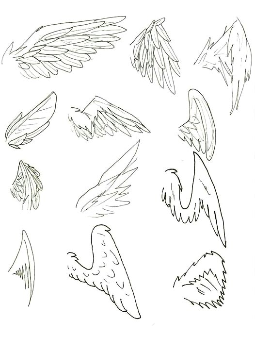 Tipos de ala