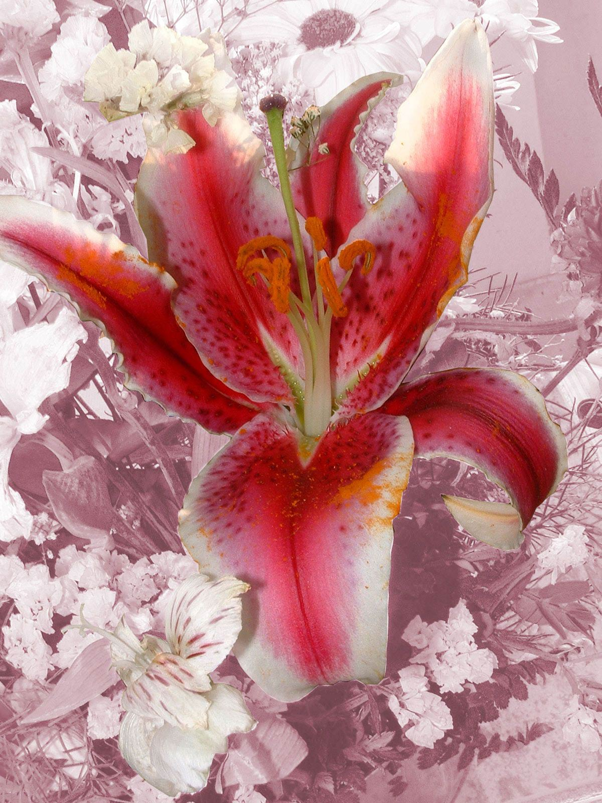 Fotos Gratis  Naturaleza - Flores - Gran corazón de flor