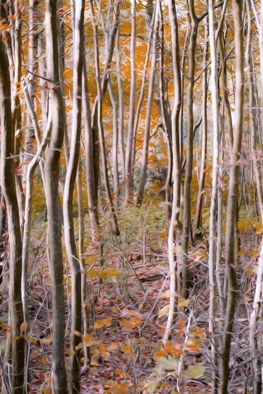 Pintura digital efecto óleo de un bosque de jóvenes árboles