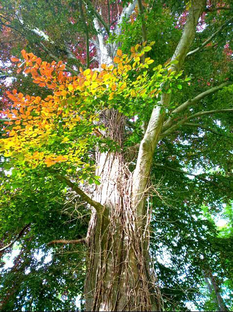 foto árbol