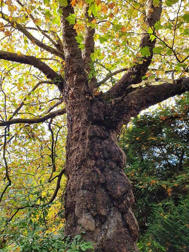 árbol grande foto