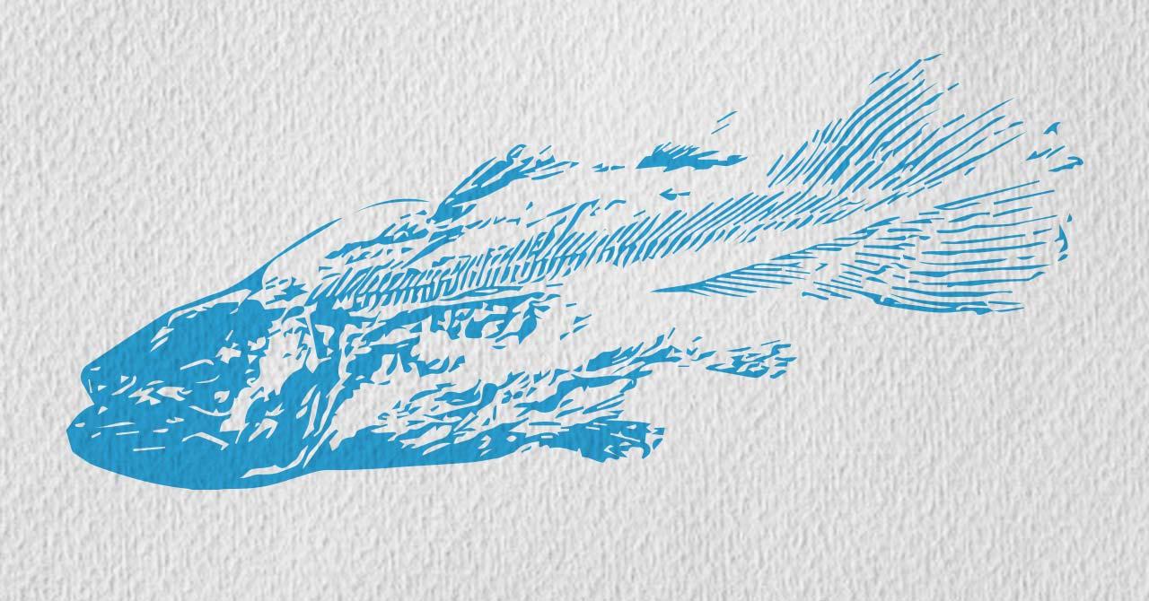 ilustracion a dos tintas de un pez