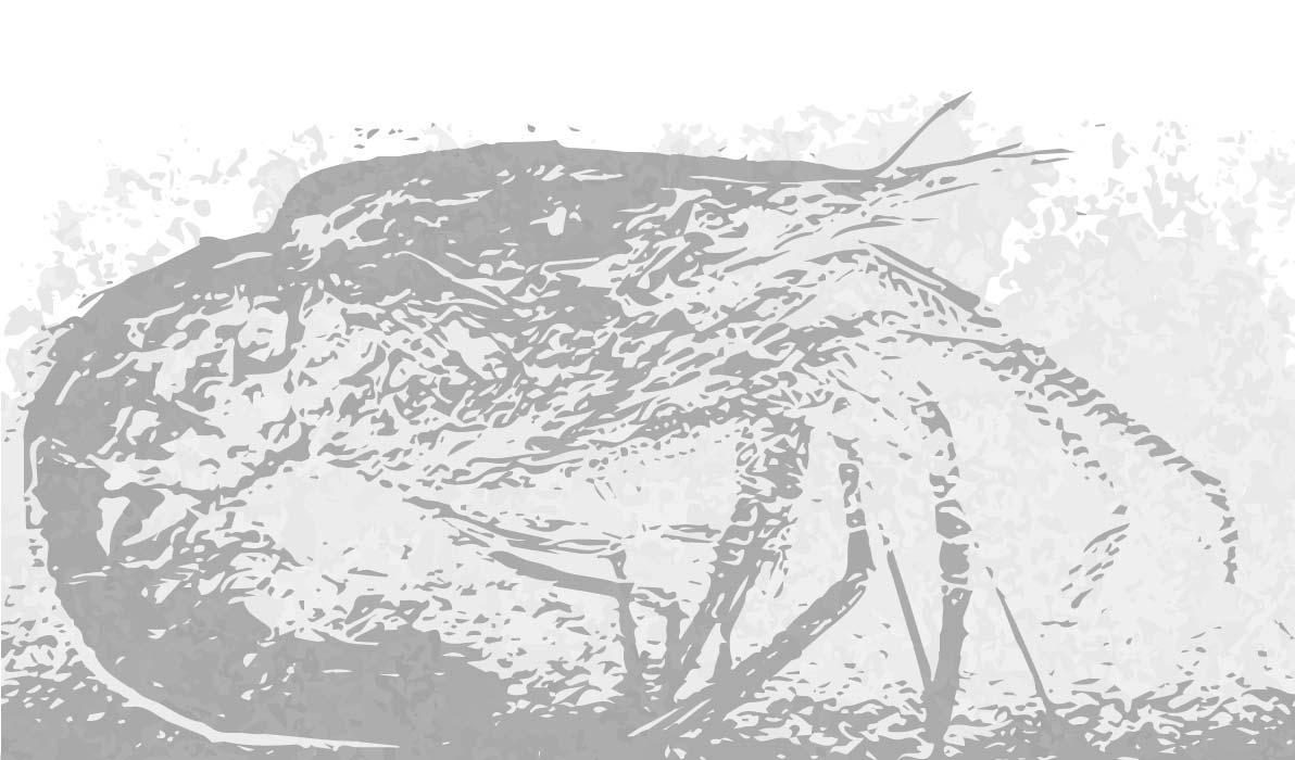 fosil gamba