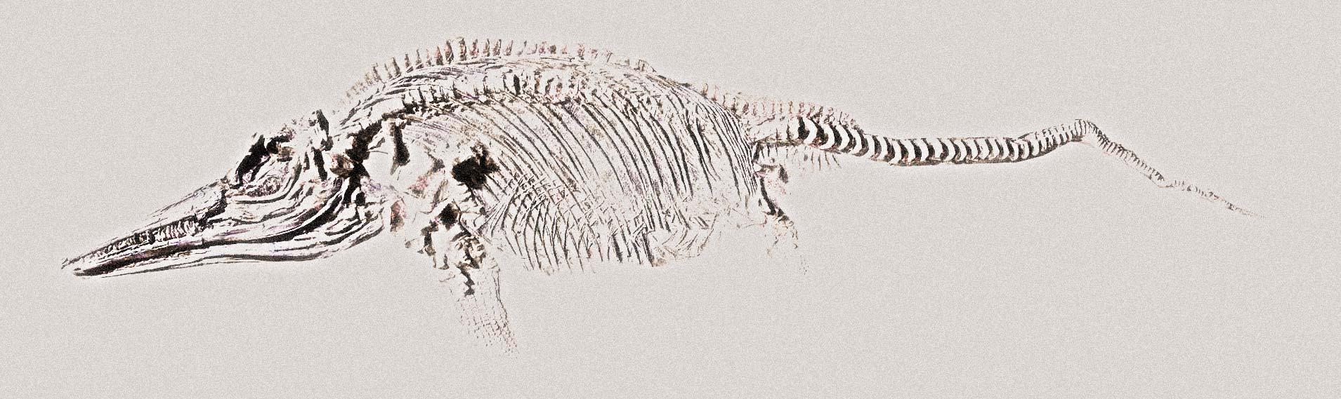 ilustración fósil lagarto marino